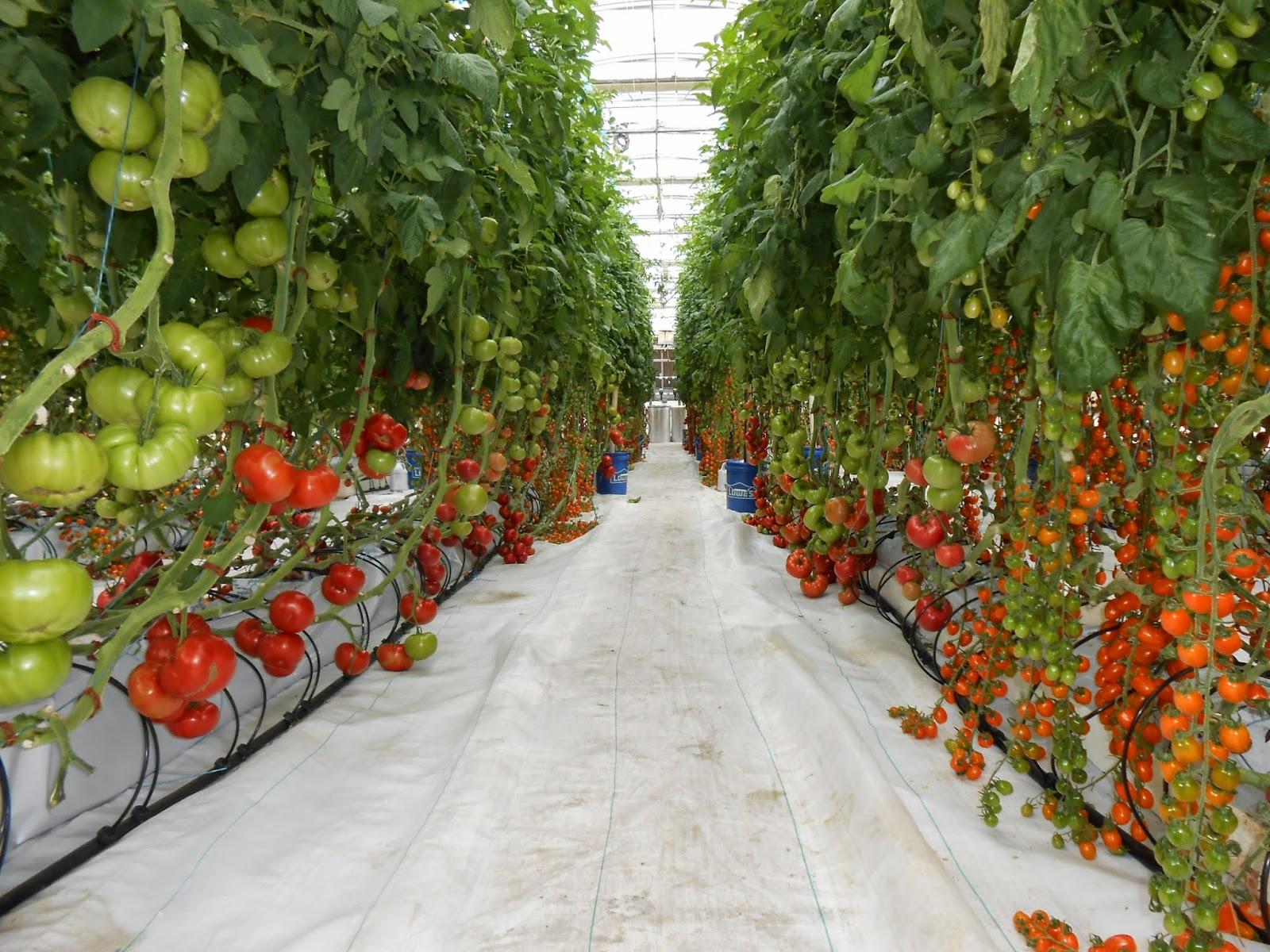 Photo 2 Dscn2823 Hydroponic Greenhouse Univ Of Ariz