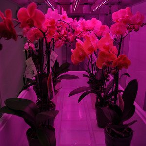 hort-americas-orchid-growing-mix